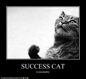 success_cat